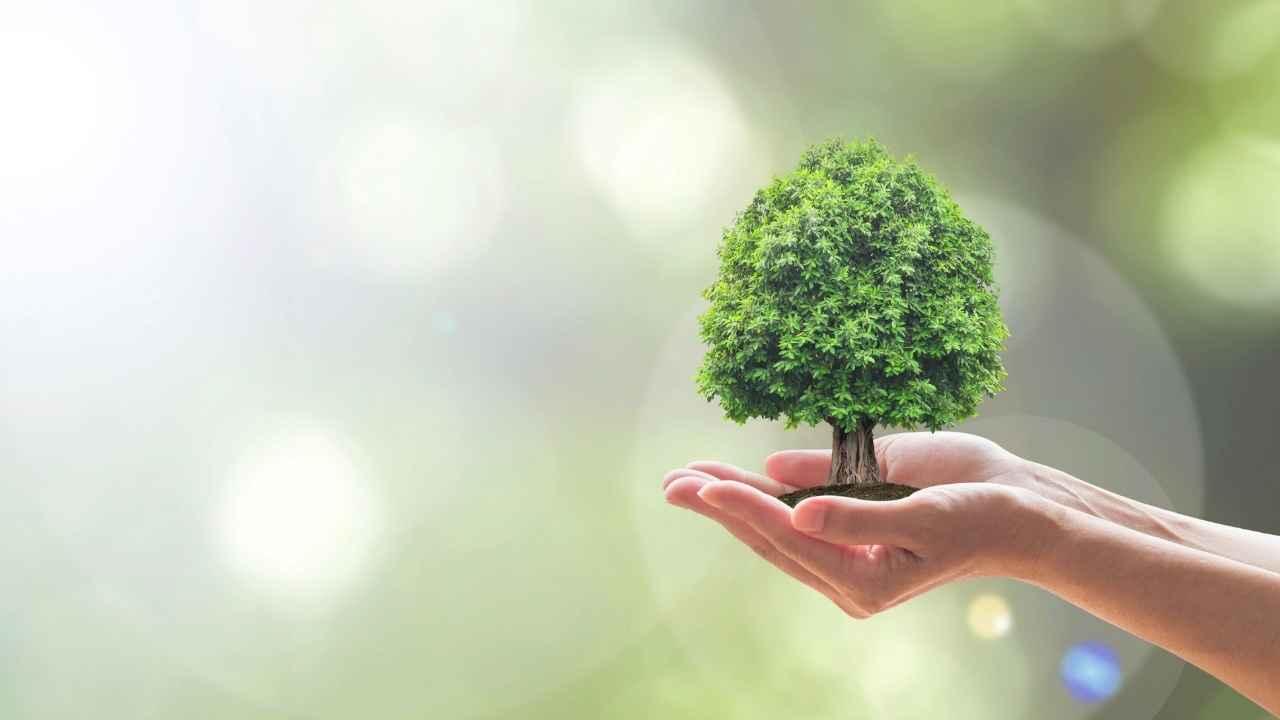 Manos sosteniendo un árbol